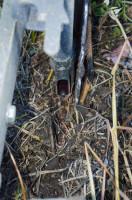 Nasiona są wysiewane przez redlicę znajdującą się tuż przy talerzu nacinającym glebę. Tuż za pierwszą redlicą znajduje się druga (na zdjęciu), która wysiewa rzutowo