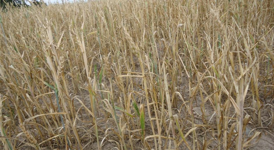 MRiRW: Zgłaszanie szkód suszowych tylko przez aplikację