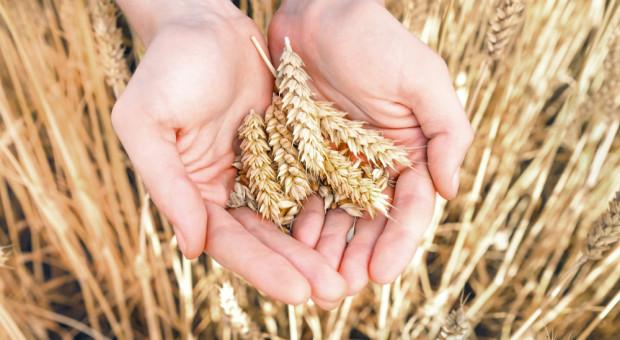 Technologia się zmienia, a pszenica ciągle tania