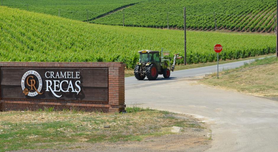 Winnica rodzinna w miejscowości Recaș to ciekawe urozmaicenie typowo rolniczego terenu zachodniej Rumunii, fot. Art Tłustochowicz