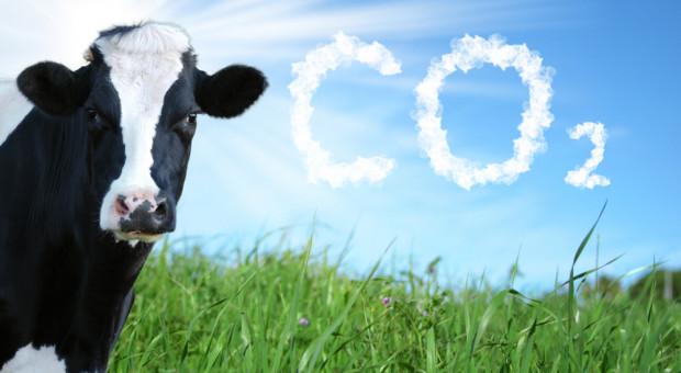 Ardanowski: KE mówi wprost, że chce zakończyć wszelką hodowlę zwierząt w UE