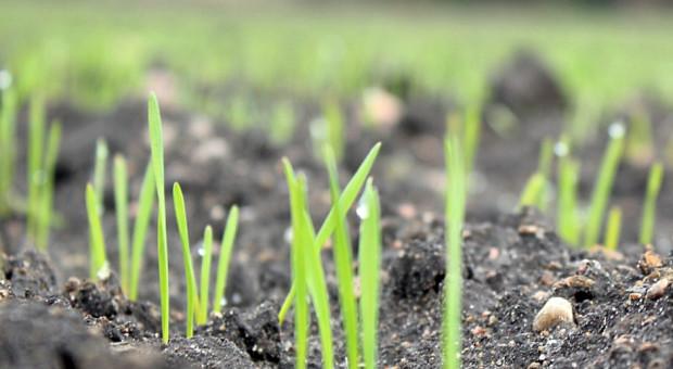 Ochrona herbicydowa zbóż – jesień 2021
