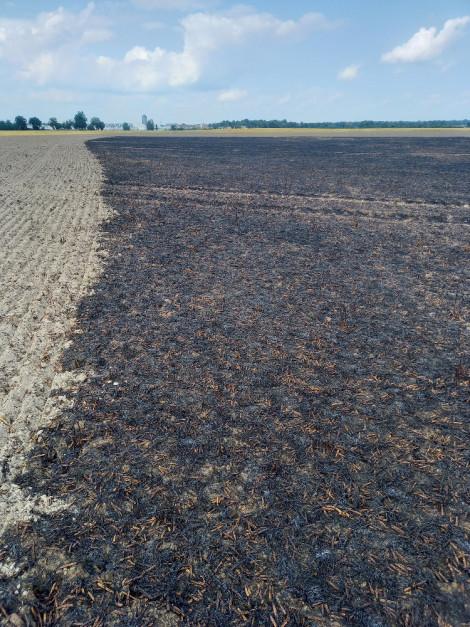 Odcięcie pożaru broną talerzową, zabieg niebezpieczny, ale ratujący resztę plantacji. / VH Polska