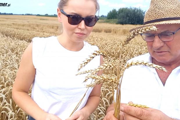 Ocena ochrony fungicydowej pszenicy na Warmii - co poszło nie tak?