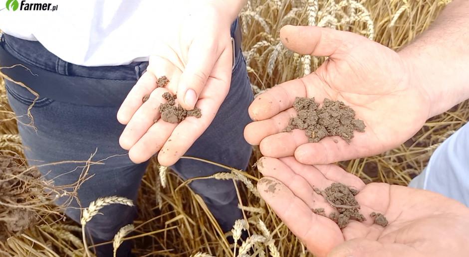 Warunki glebowe na plantacji pszenicy - dlaczego warto wapnować?