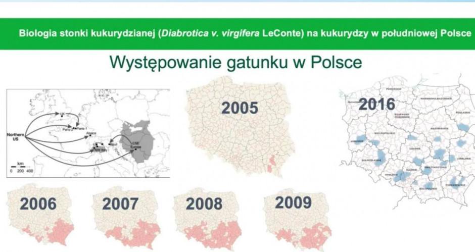 Występowanie stonki kukurydzianej screen 61 sesja IOR PIB w Poznaniu, wykład prof. P. Beresia
