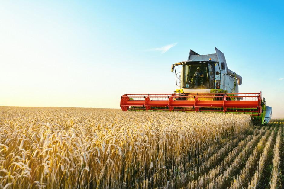 Błyskawiczny wzrost ceny pszenicy na MATIF