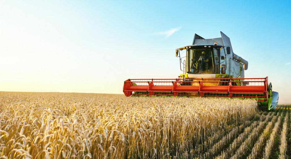 Produkcja zbóż w 2021 r. niewystarczająca, aby zapobiec spadkowi światowych zapasów