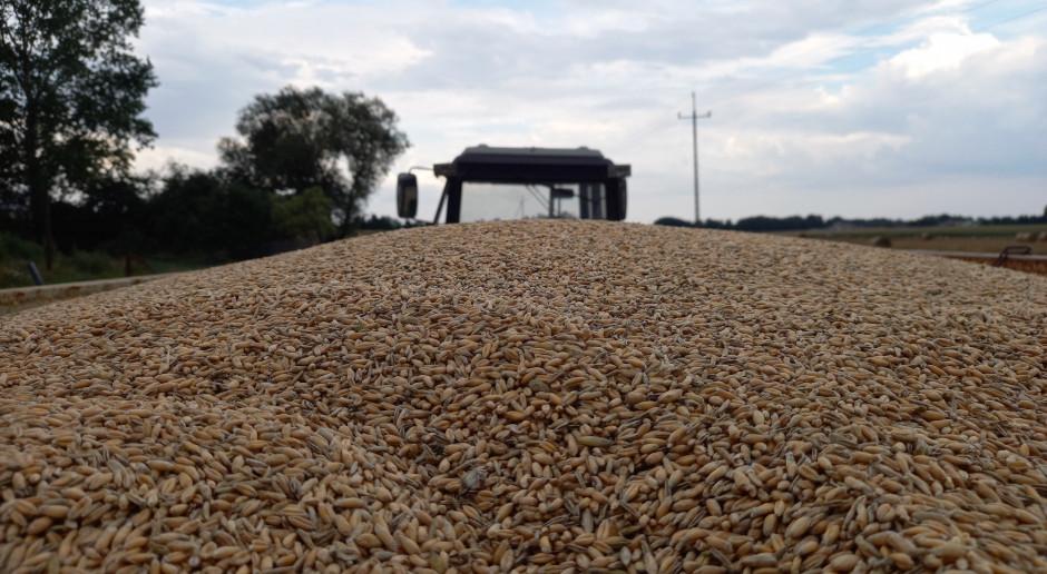 Mocny wzrost ceny pszenicy na MATIF