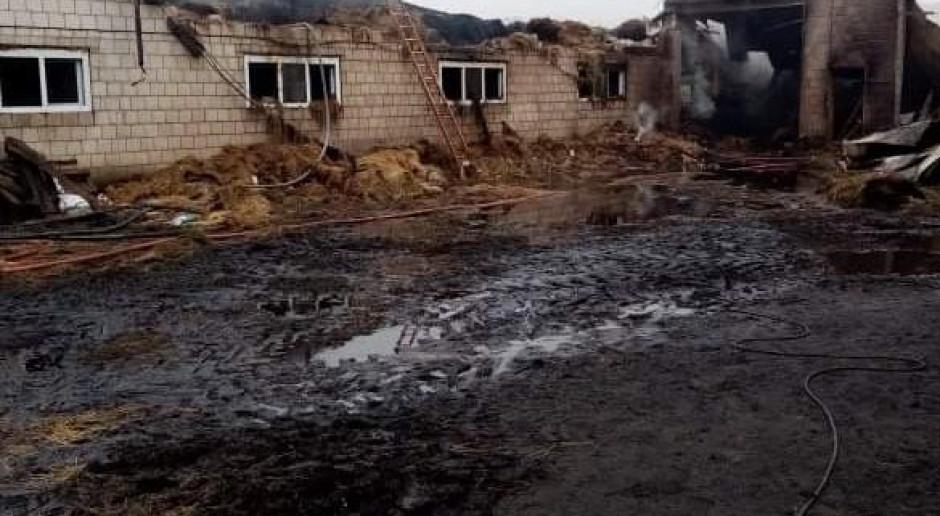 Wielki pożar w stadninie pod Kluczborkiem