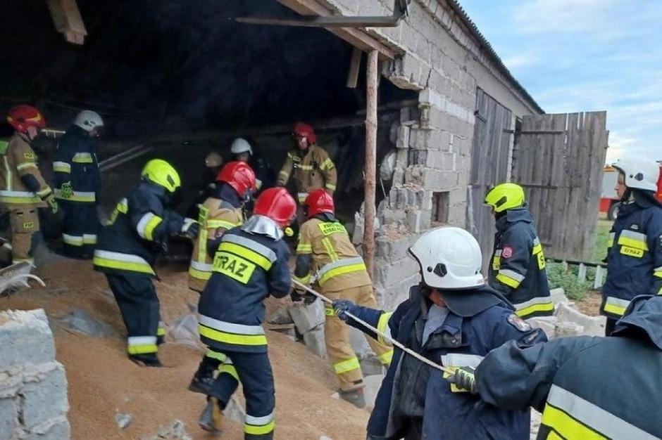 Na ratunek krowom ruszyło 7 zastępów strażackich, Foto: PSP Aleksandrów Kujawski