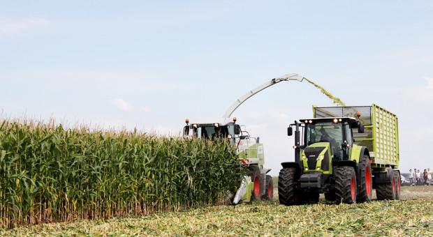 Kiszonka z kukurydzy –ogranicz straty na starcie