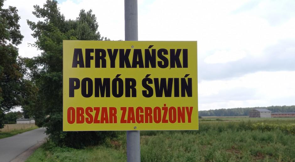 Trzecie ognisko ASF w Małopolskiem. Pomór blisko kolejnego regionu