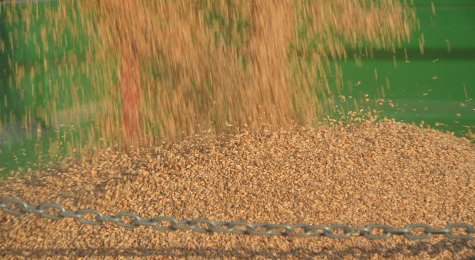 Niska podaż ziarna zbóż w skupach