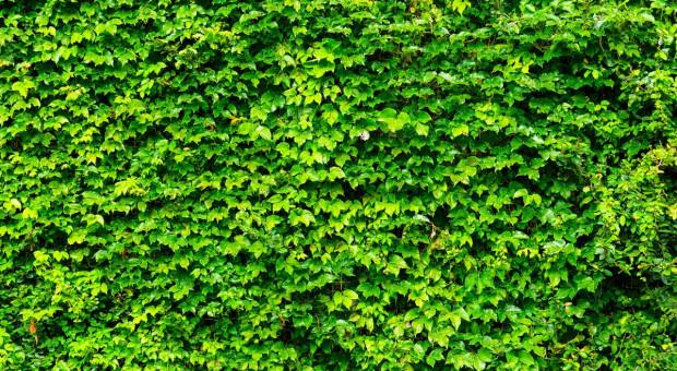 Grupa Azoty posadzi Zielone Ogrodzenie w ramach działań prośrodowiskowych