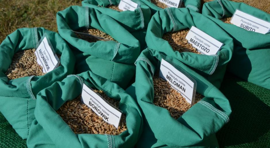Po ile materiał siewny zbóż? Zdecydowanie droższy