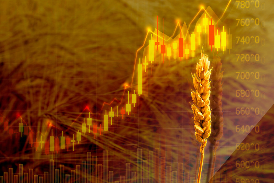 W ostatnim tygodniu drożały zboża na światowych rynkach