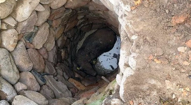 Byk wpadł do studni