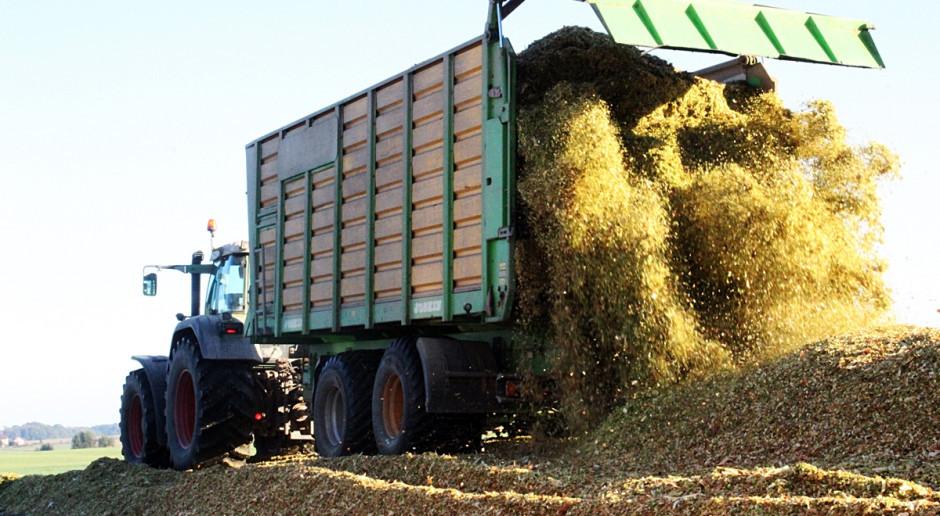Na zachodzie kraju ruszyły zbiory kukurydzy kiszonkowej. Na południu jest mokro