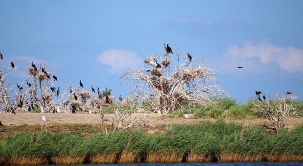 Dzikie ptactwo niszczy uprawy, a dziki mnożą się na potęgę
