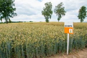 Prezentowana odmianajest zalecana do uprawy naobszarze aż 15 województw