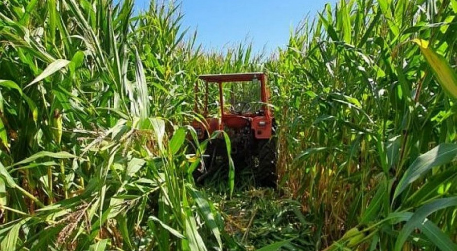 Skradziony ciągnik ukryty na plantacji