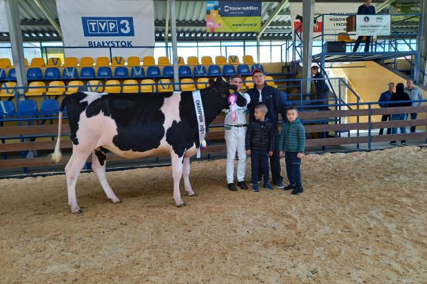 Zdrowa, pojemna krowa da najlepsze mleko