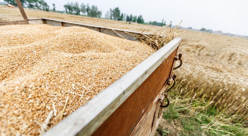 W Rosji zebrano 100 mln ton zbóż