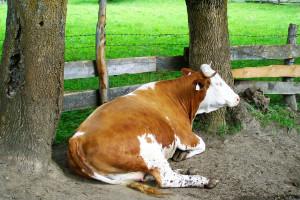 Jaka była ubiegłoroczna produkcja żywca, mleka i jaj w Polsce?