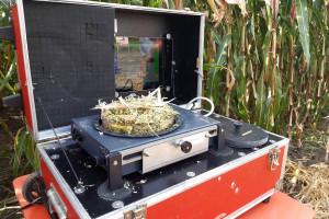 Czy kukurydza na kiszonkę jest gotowa do zbioru?