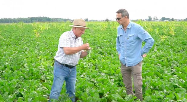 Współrzędna uprawa kukurydzy ozimej i buraka cukrowego
