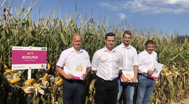 IGP Polska: propozycje odmian kukurydzy na sezon 2022