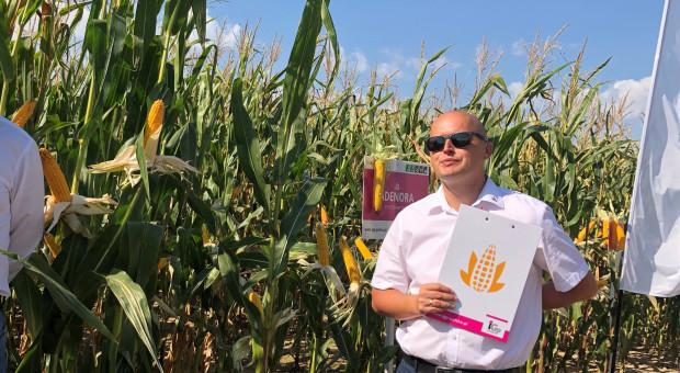 Czy zabraknie materiału siewnego kukurydzy na następny sezon?