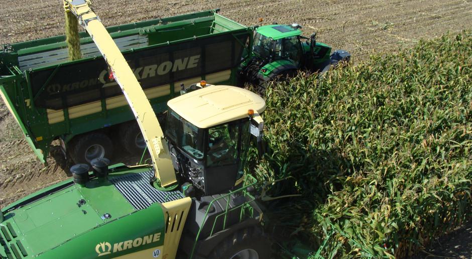 Ile kosztuje usługowe koszenie kukurydzy?