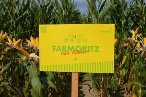 Odmiany kukurydzy na rok 2022 od Farmsaat Polska