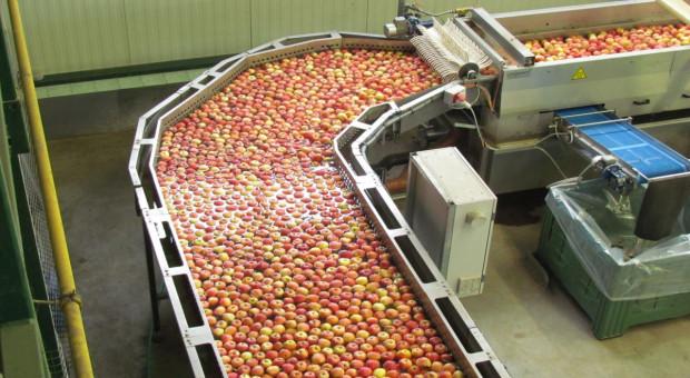 Biedronka: 100% jabłek sprzedawanych w sieci pochodzi z Polski