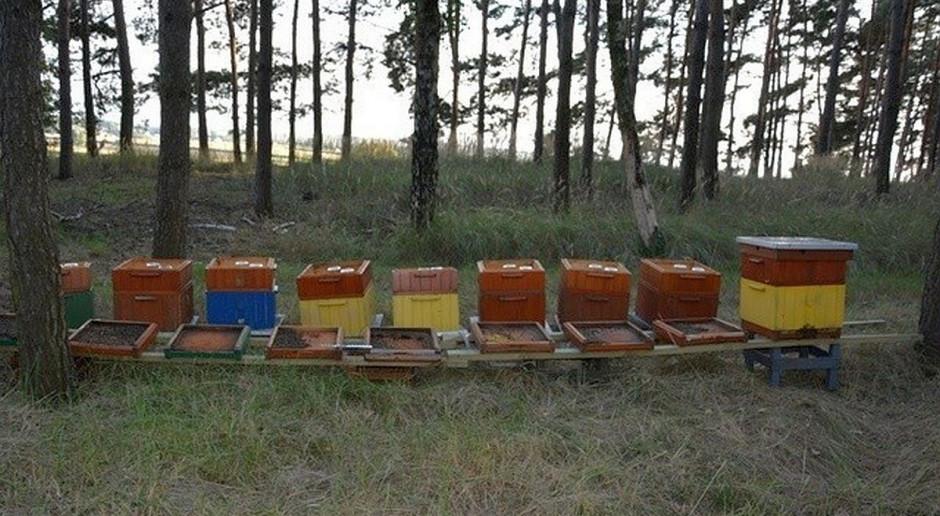 Wytruli pszczoły w pasiece