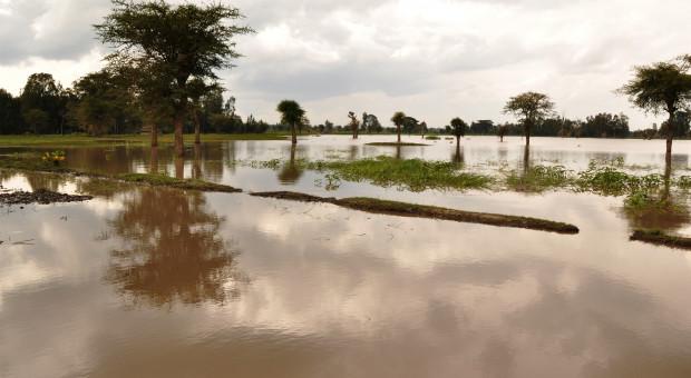 Rolnicy wyczekują na jesienną turę ubezpieczeń upraw rolnych