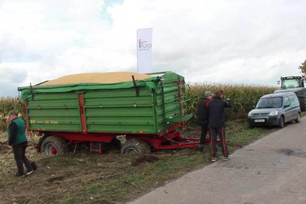 Zbiór kukurydzy - uwaga na grząskich polach