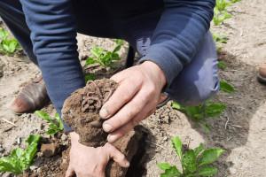 Fakty i mity o uprawie roli z Top Farms