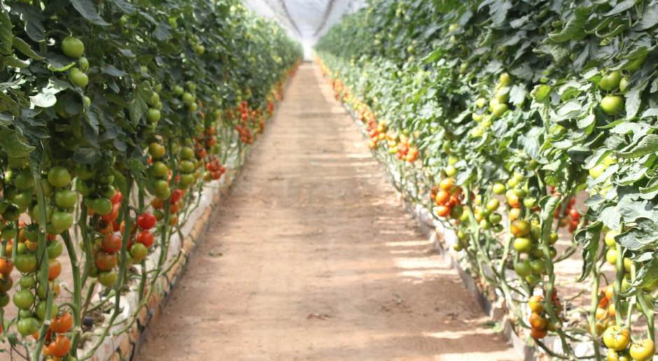 Bayer wprowadza na rynek ekologiczne nasiona warzyw