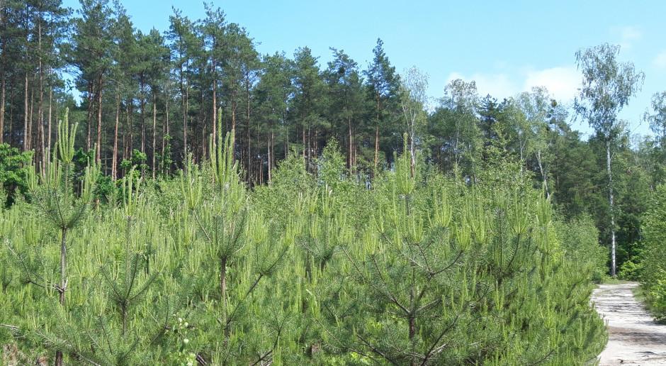 Strategia leśna UE zagraża przyszłości polskich lasów i gospodarce?