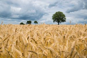 Po ile ziemia rolna?