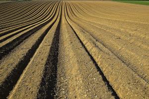 KOWR: Sprzedaż ziemi rolnej jest na stałym poziomie