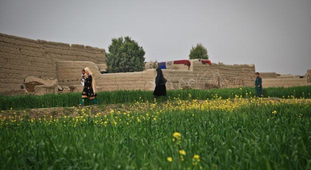 Pomoc dla afgańskich rolników