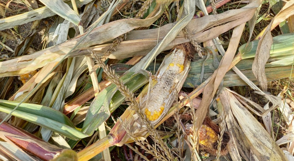 Rolnicy skarżą się na skutki stanu wyjątkowego