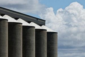 Białoruś: Dla większości upraw zbiory powyżej średniej