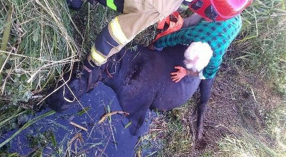 Koń tonął w rowie, ratowali go strażacy