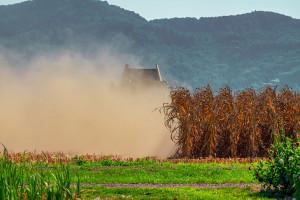 KE o średnich plonach roślin uprawnych w Rosji i na Ukrainie