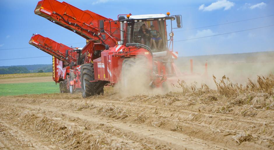 O ile zmniejsza się krajowa uprawa ziemniaka?